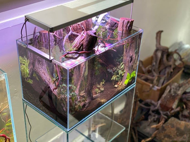Forest Aquascape Build At Hakkai Aquascape Gallery - San Diego, CA