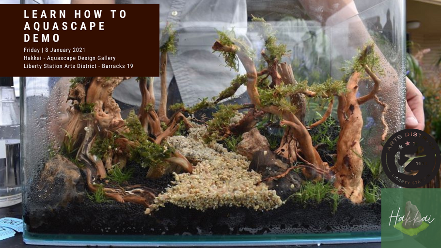 Learn How To Aquascape Demo - Friday January 8th 2021 - First Fridays Arts District Liberty Station