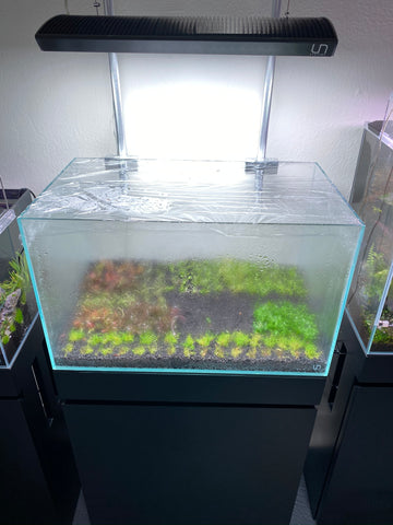 DSM Dutch Aquascape at Hakkai Aquascape Design Gallery - Arts District Liberty Station, San Diego, CA