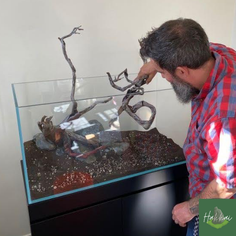 Join us for an aquascape demo at Hakkai Aquascape Gallery in Liberty Station Point Loma, San Diego, CA
