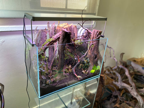 Forest aquascape at Hakkai Aquascape Gallery in San Diego