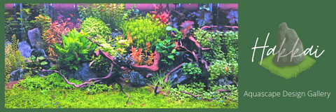 Hakkai Aquascape Gallery - San Diego's First Aquascaping Art Gallery