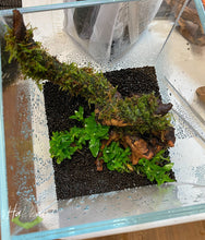 Load image into Gallery viewer, Terrarium Aquascape Workshop