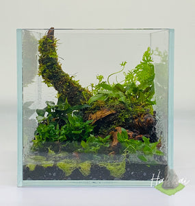 Terrarium Aquascape Workshop