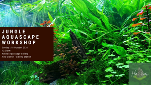 Jungle Aquascape Workshop