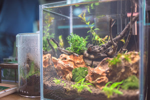 Aquascaper Cube Tank Starter Kit