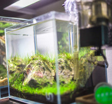 Load image into Gallery viewer, Aquascaper Cube Tank Starter Kit