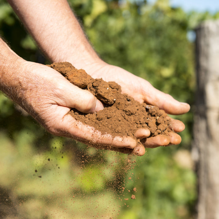 Australia's Unique Terroir