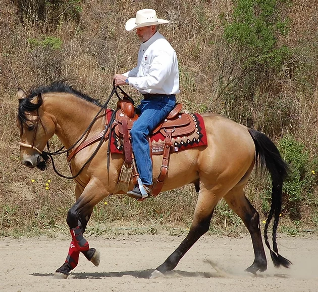 Teaching Your Horse to Pick-Up the Correct Lead