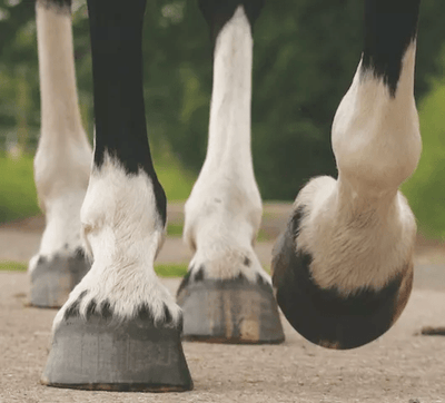 A Word on Hoof Care