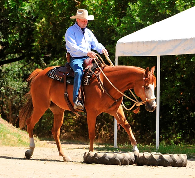 How Much Time Should I Spend Training My Horse Each Day?