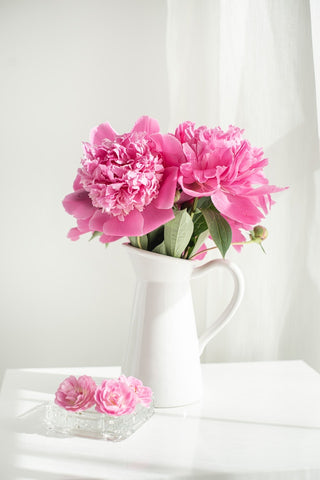 Pink carnations in a white jug