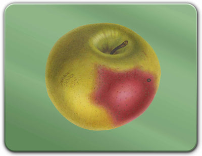 Apple of My Eye - Placemat - Milola Design