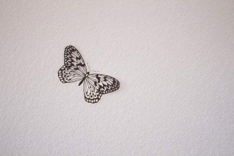 Butterfly sticker on the wall
