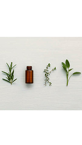The Essential Oil Guide