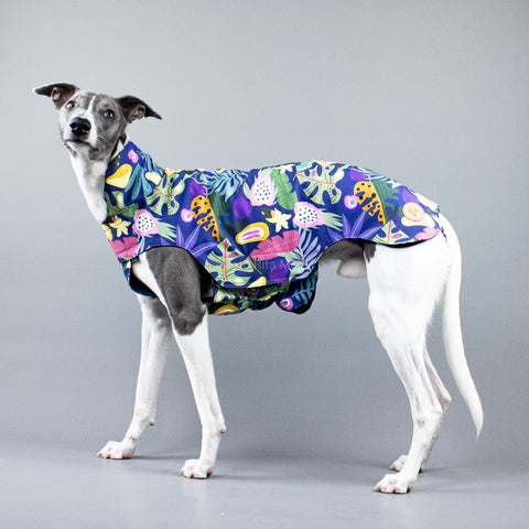 City Breeze dog raincoat™ WHIPPET Regenmantel Fruity