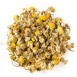 Egyptian Chamomile (Special Selection)