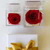 Everlasting Single Rose in Acrylic Box
