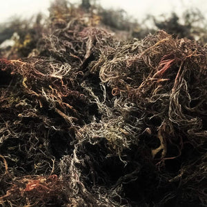Raw Purple Wild Craft Sea Moss