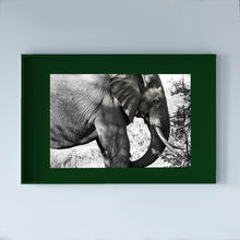 Load image into Gallery viewer, SOUTH AFRICA - KRUGER PARC - elephant
