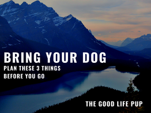 Bring Your Dog: Plan These 3 Things Before You Go