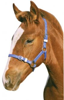 FOAL/MINI PVC HEADSTALL