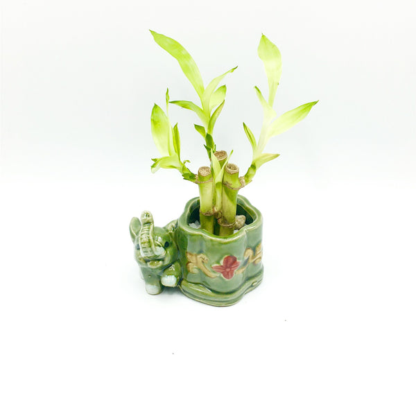 3.5''High Elephant Glazed Vase For Lucky Bamboo