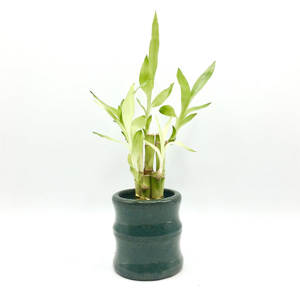 3.5''High  Glazed Vase For Lucky Bamboo