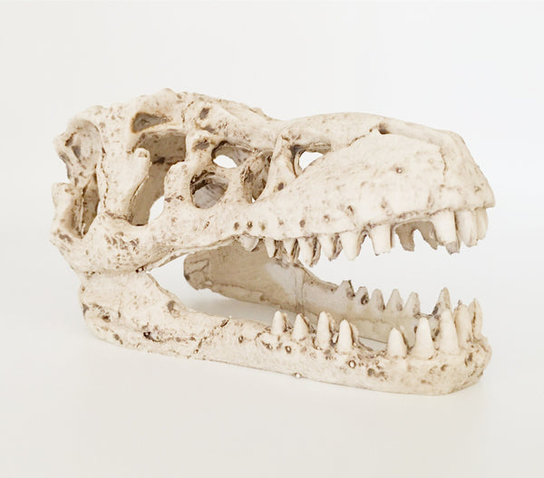Aquarium Or Reptile House Resin Emulation skull Ornament And Family Daily Decoration
