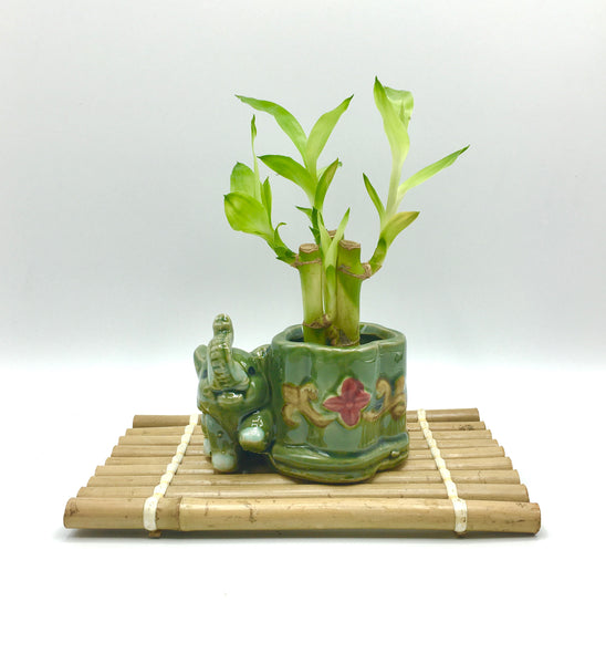 Bamboo stand for bonsai & plants Large