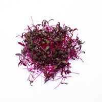 Beetroot Amaranth