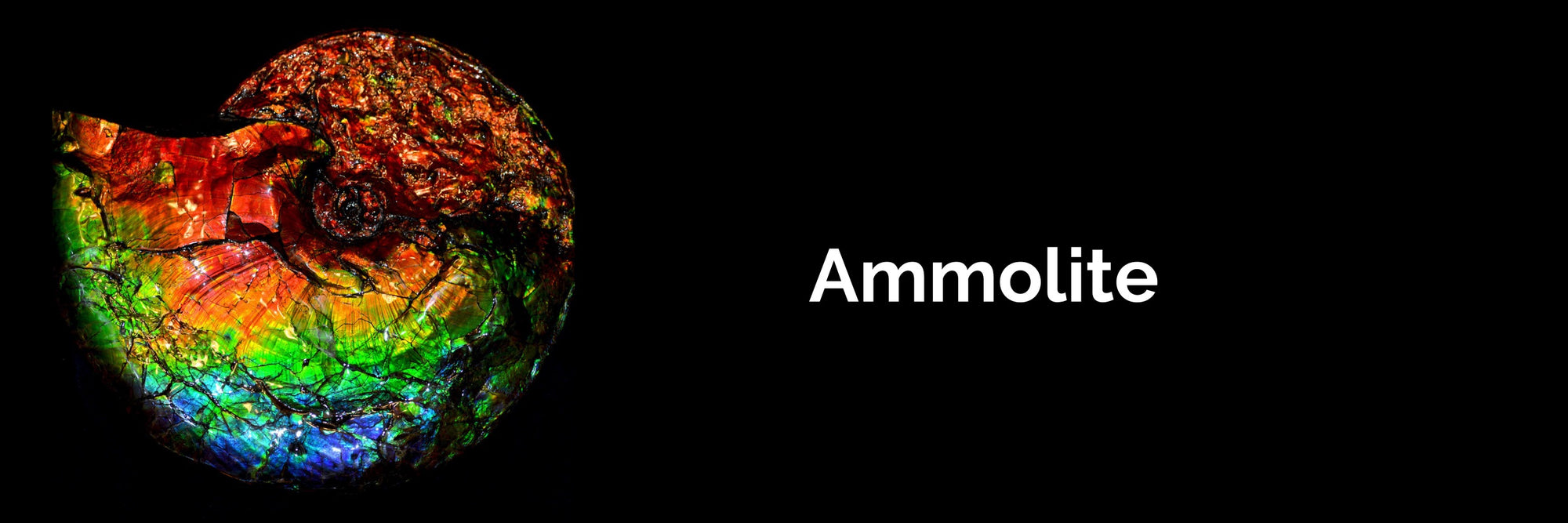 Monarch Ammolite