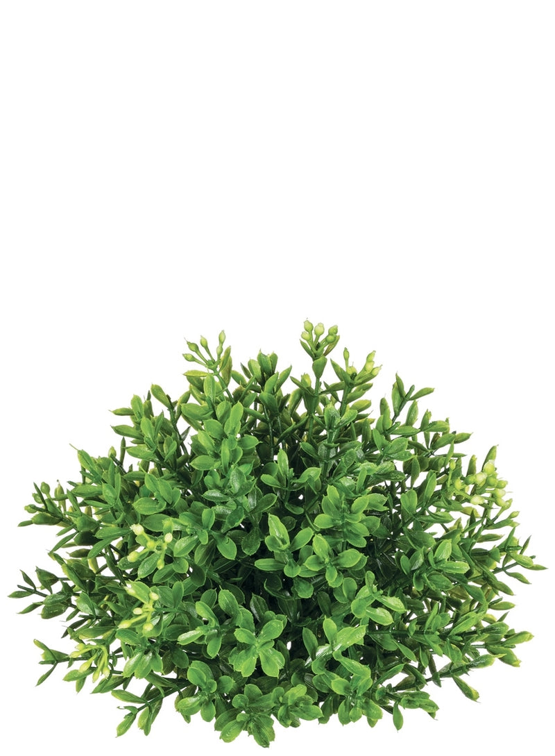 New England Boxwood Half Orb