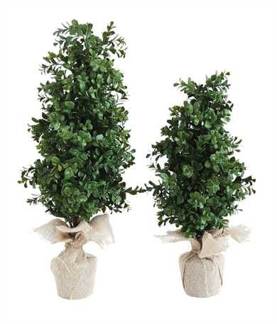 Boxwood Tree w/Burlap Wrapped Pot