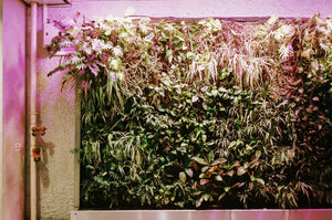How to Set Up A Vertical Garden & Care for It