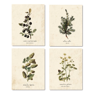 Vintage Fall Botanical Prints