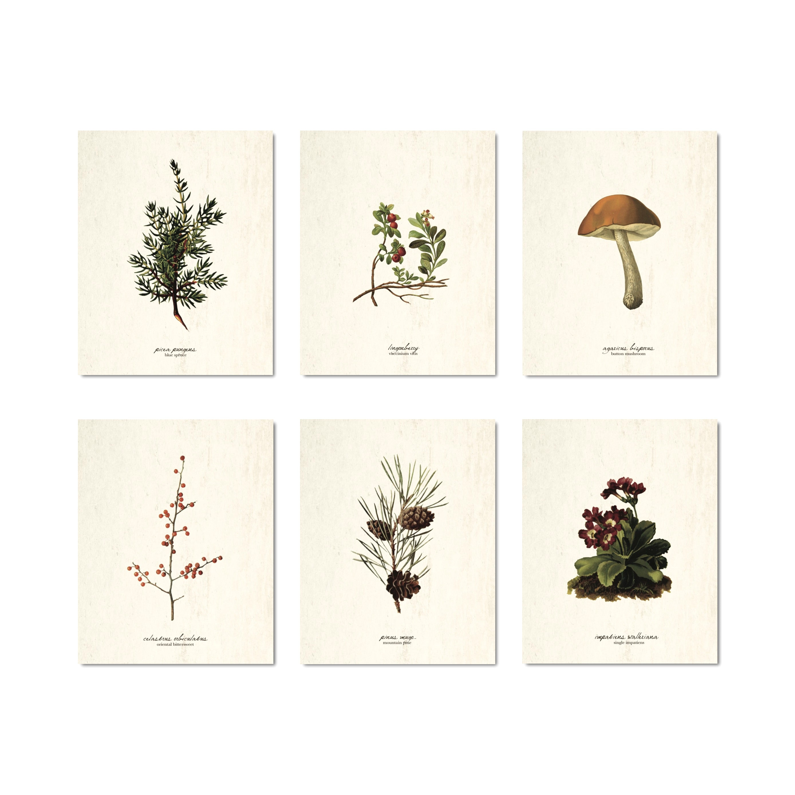 Winter Botanical Collection