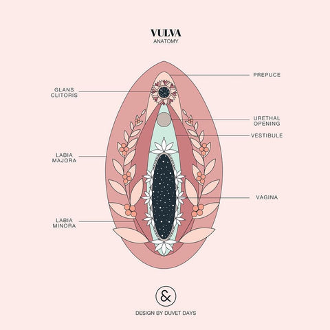 Vagina Talk Basic Anatomy Care Fit And Thick
