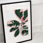 pink ficus leaves poster