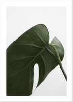 tropical monstera leaf poster