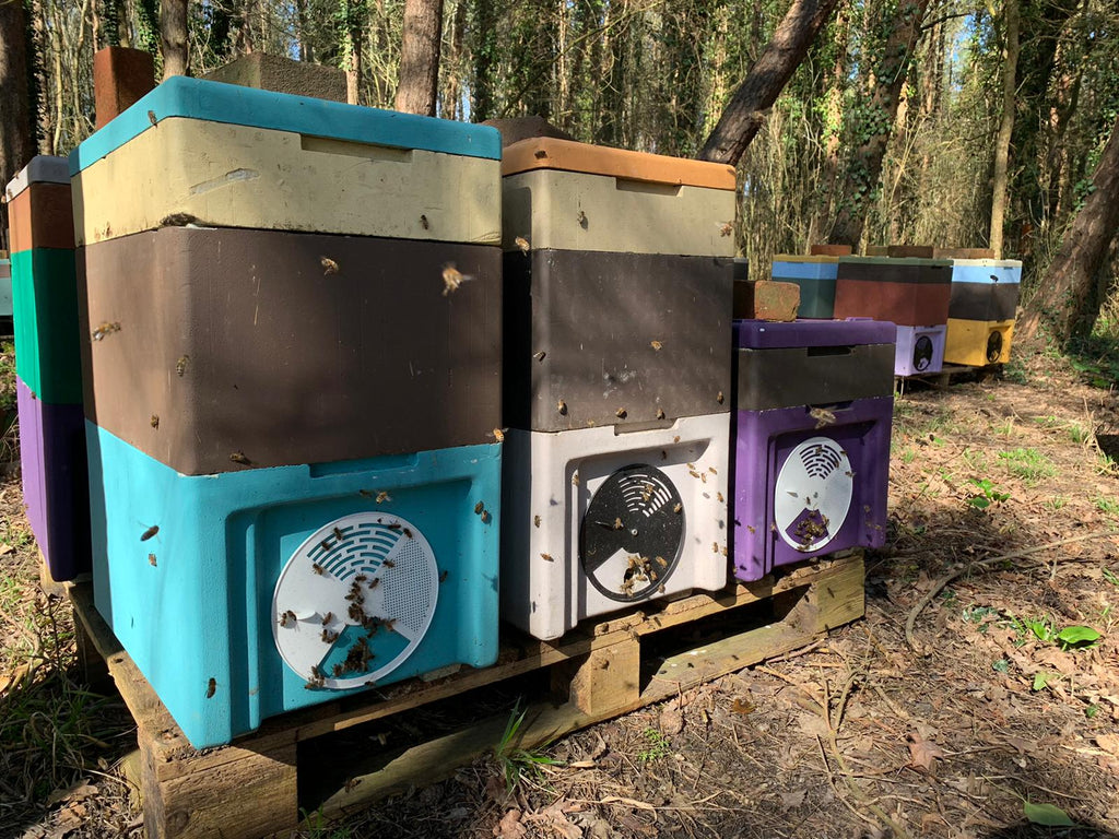 Bee Orders Update 11th March 2021