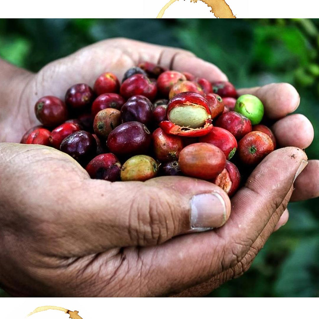 How are coffee beans flavoured - Material, History & Making