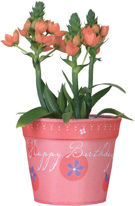 Flower Pot Cover - Happy Birthday