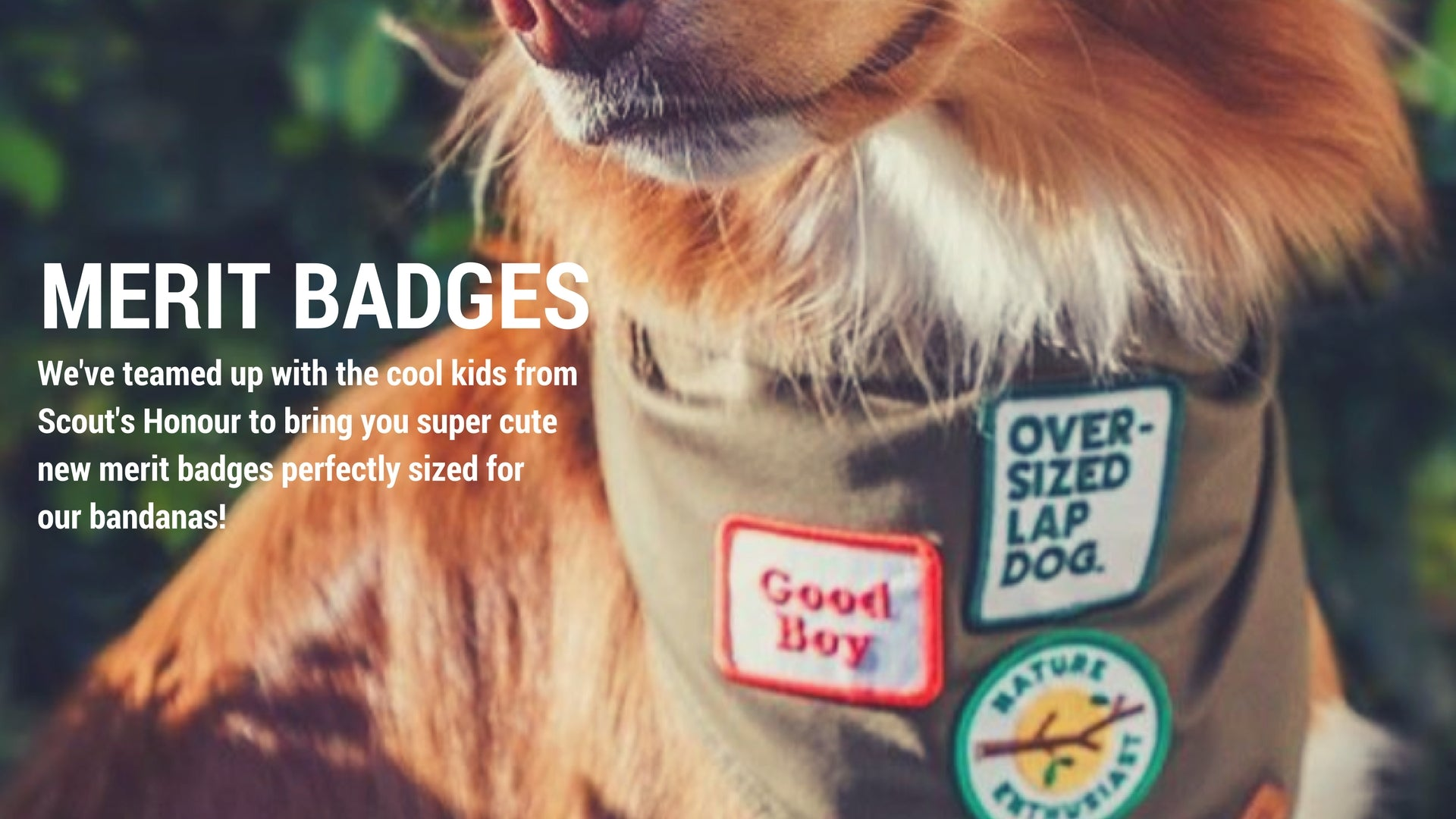 Scouts Honour Merit badges - Patches for dogs
