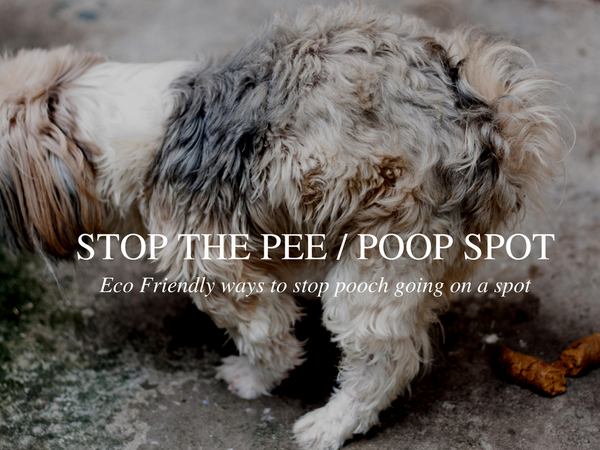 How to stop your dog peeing on a spot the eco friendly way