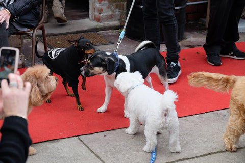 meeting dogs on the red carpet