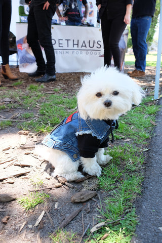 Hank Marvin Market denim dog vest