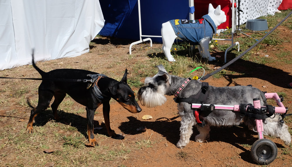 Dogs of Chillout Festival