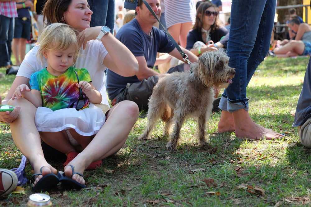 chillout festival dog show
