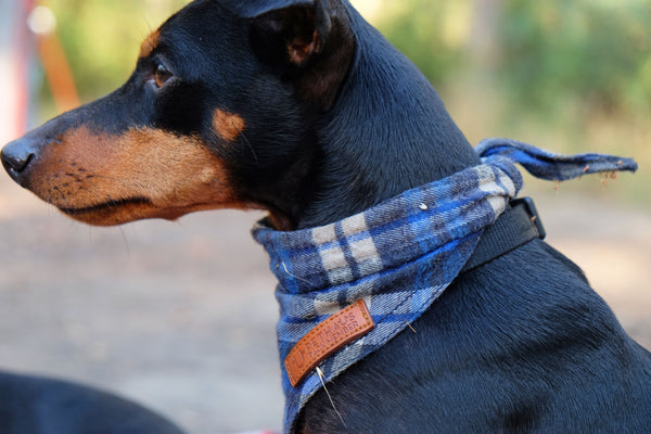Camping with dogs, check dog bandana by Pethaus